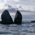 Severeal birds perched on a huge split rock in the ocean.